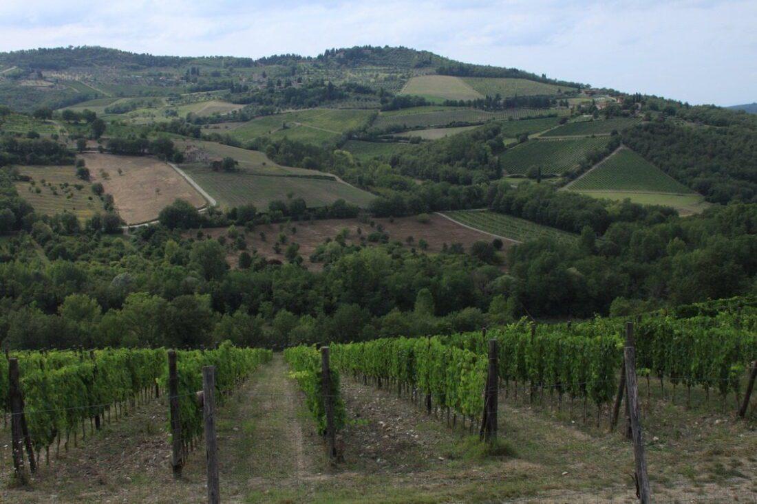 winnice w toskani