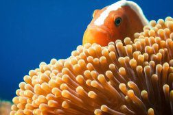 nurkowanie - filmy video