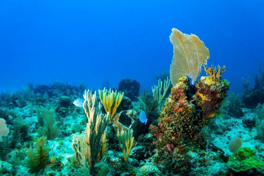 podwodny świat na Kubie