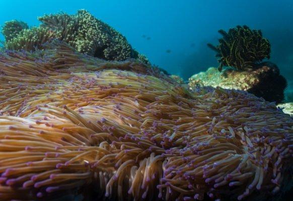 Nurkowanie na Filipinach – dlaczego chcemy wrócić na Balicasag ?