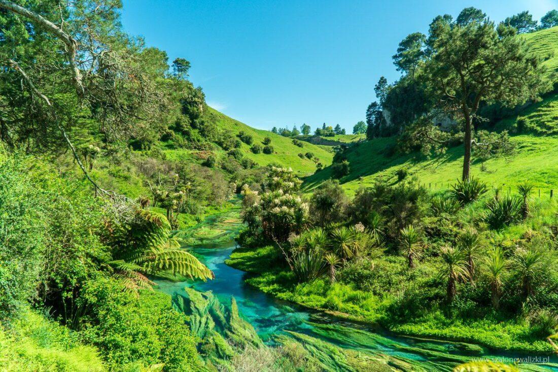 Blue Spring w Nowej Zelandii