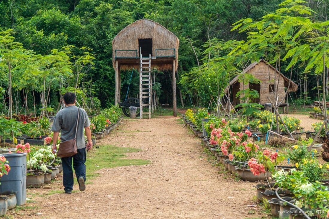 battambang w kambodży