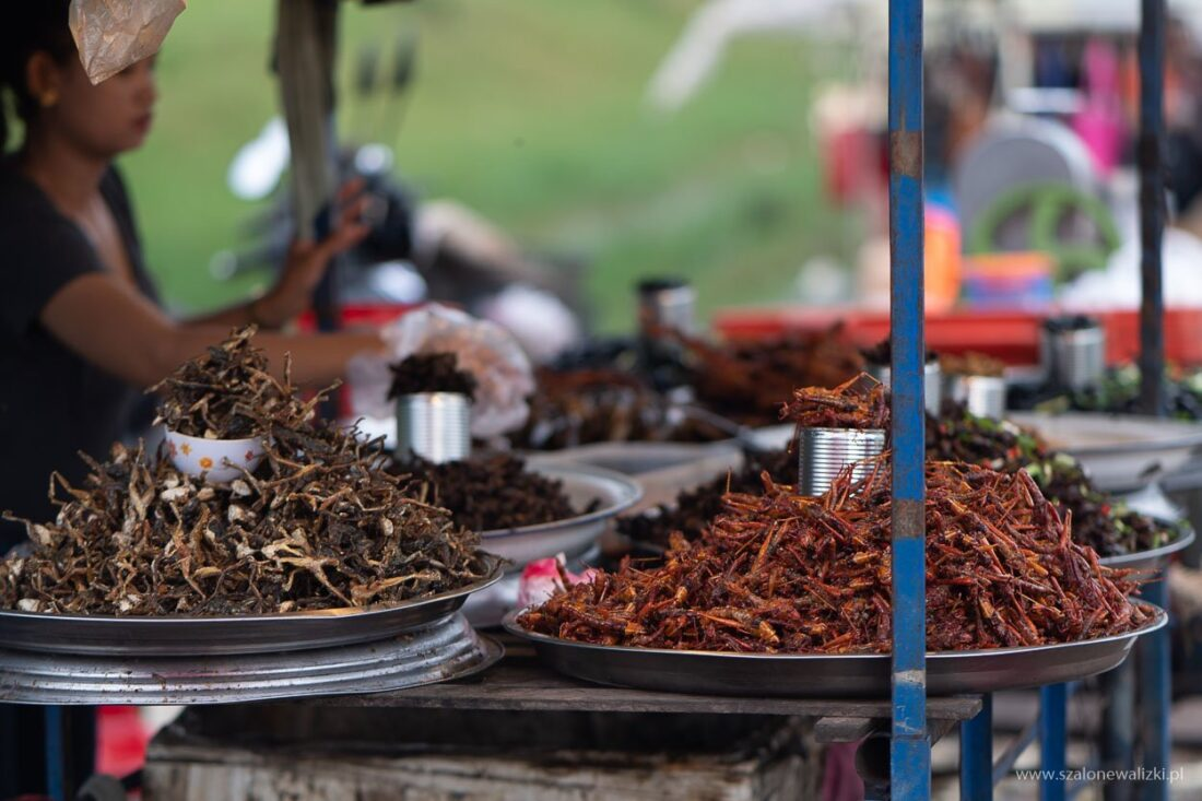 smażona szarańcza w Kambodży