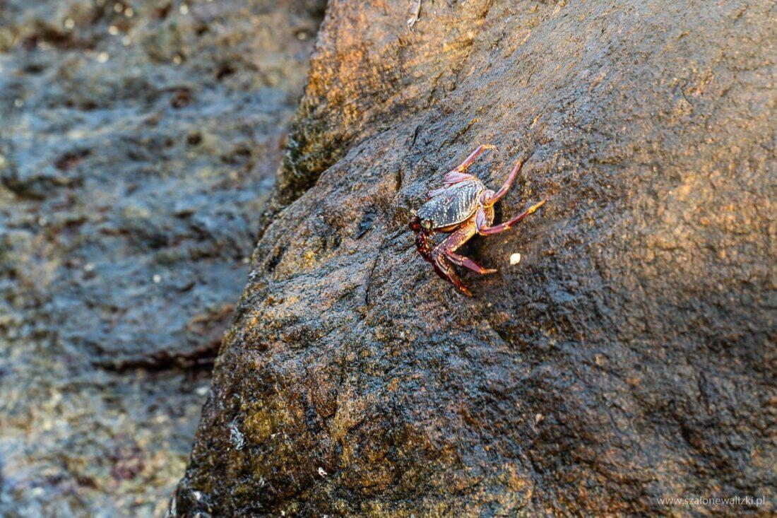 kraby na sri lance