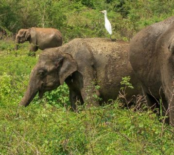 najpiękniejsze zwierzęta sri lanki