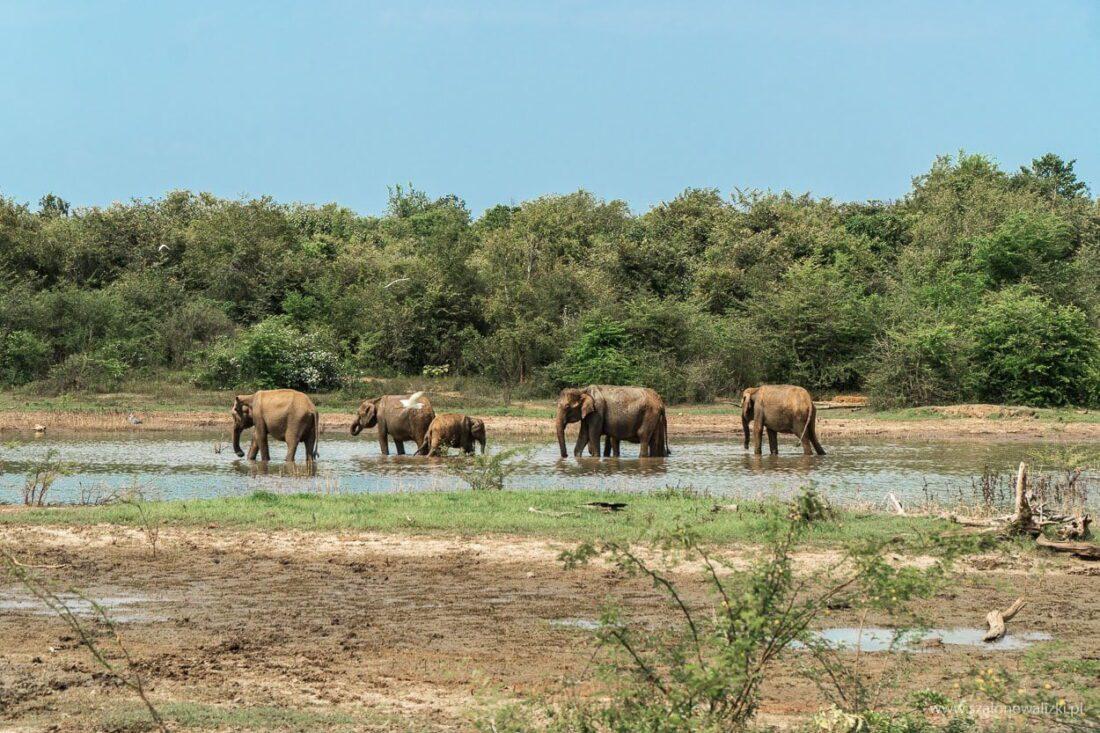 park narodowy udawalawe