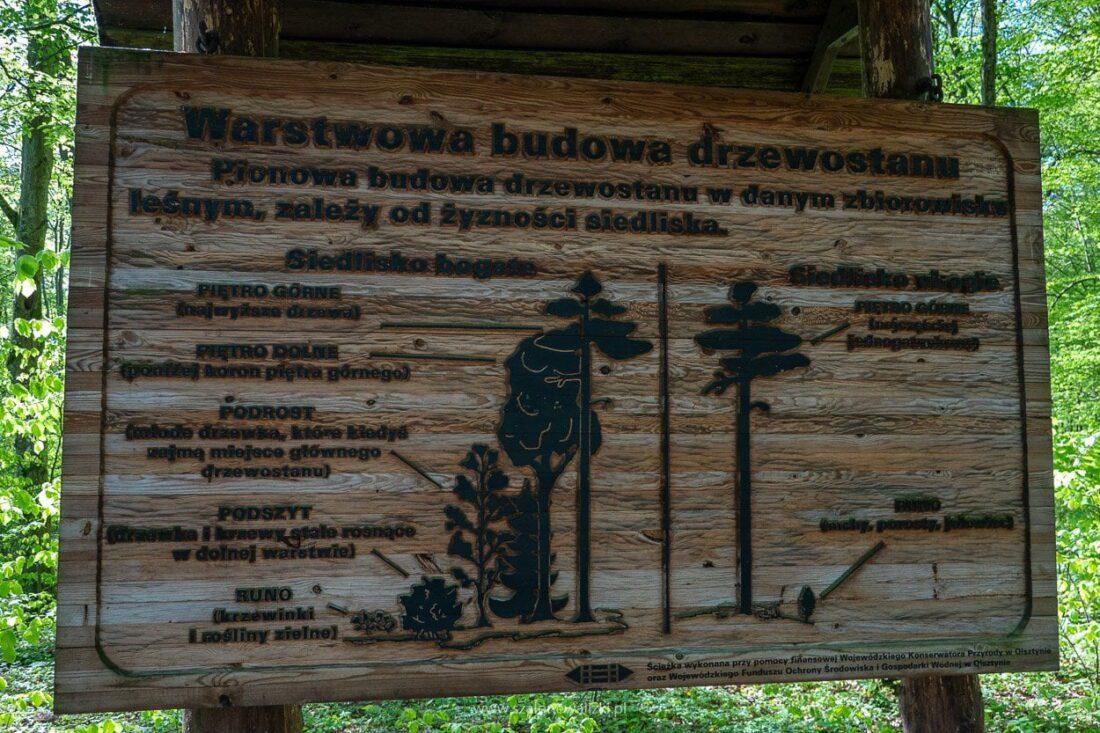 rezerwat sosny taborskiej
