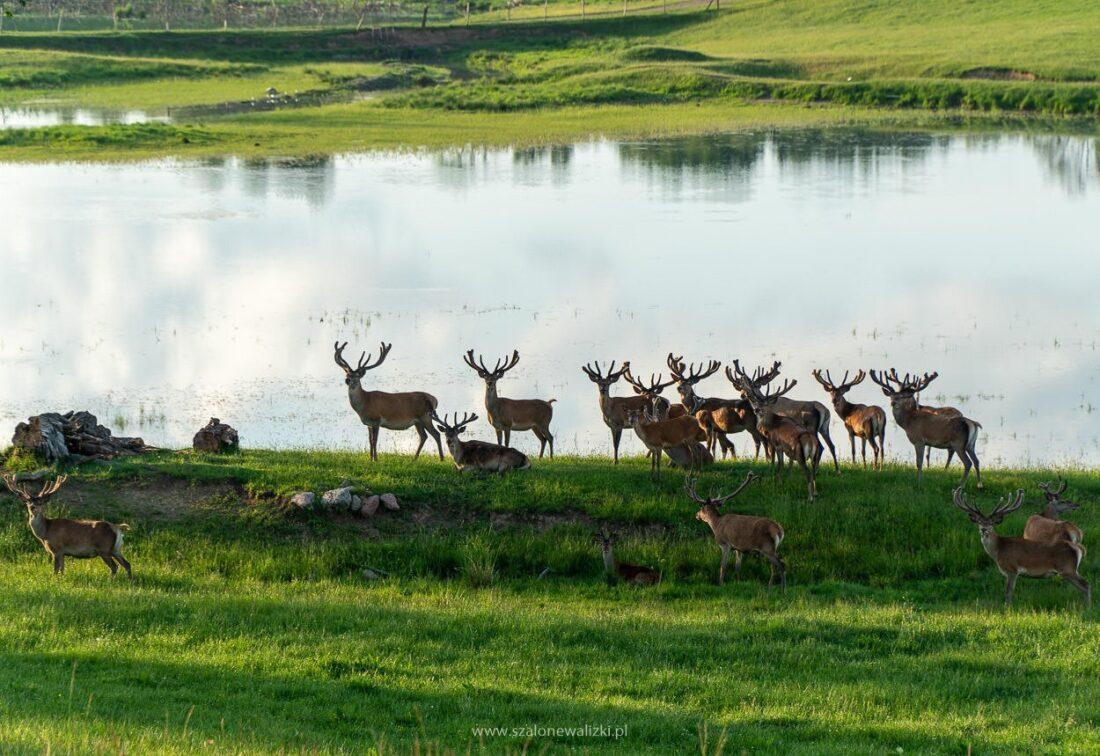 mazurskie safari